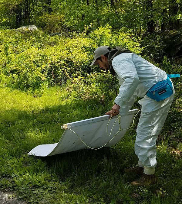 Person dragging fabric across grass to collect ticks
