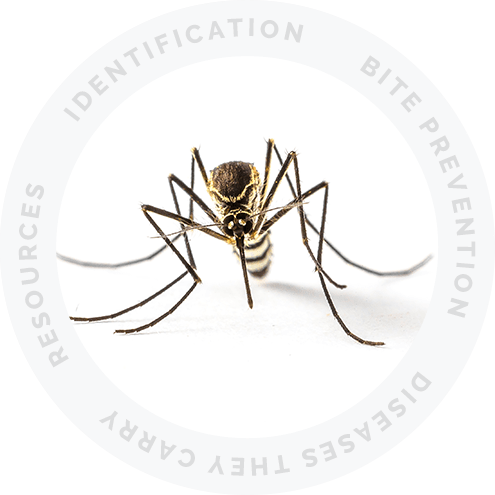 Mosquito Resource Picture Link