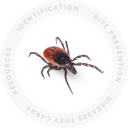 Ticks Resource Picture Link
