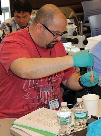 Boot camp participant performing larval resistance assay